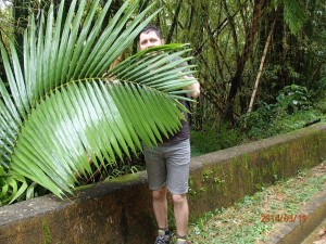 El Yunke big leaf