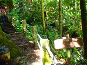 big tree trail